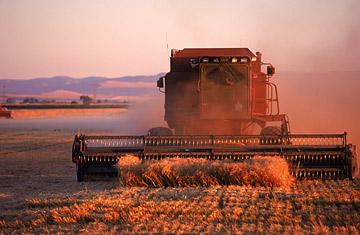 farm_1116.jpg