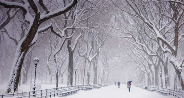 central-park-snow-snow-covered-trees-and-benches---central-park-new-york-city-a-6sa3zgb0